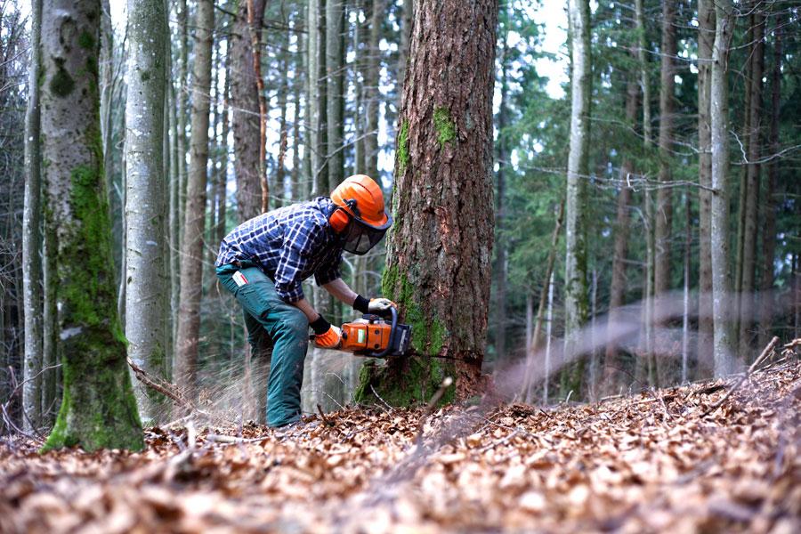 Holzfäller sägt Baum